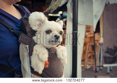 Cute Dog staying in the knapsack or bag by Thai women shopping in market process in vintage style