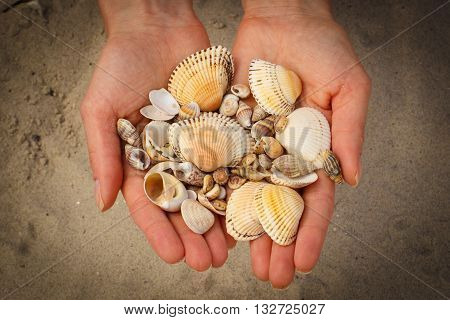 Seashells and scallop in hand of woman at the beach summer time