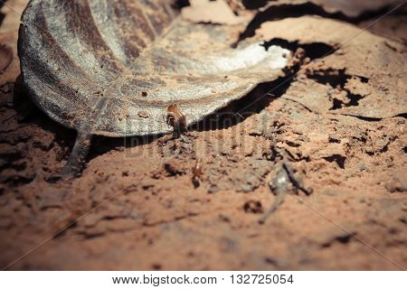 Termite Floor And Leaf