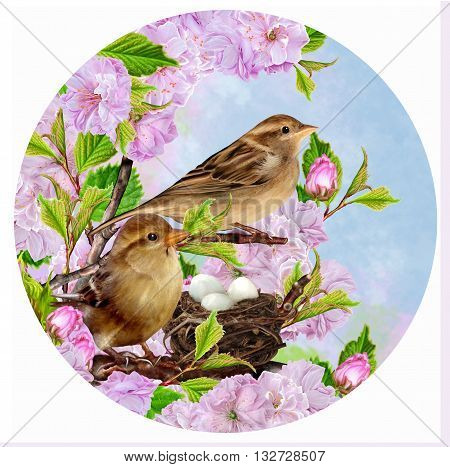 Two sparrows on near the nest on the background of the cherry blossoms circle. Round form.