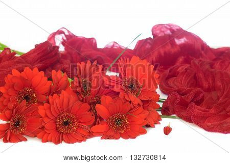 A bunch of red gerbera decorated with red silk scarf isolated on white background