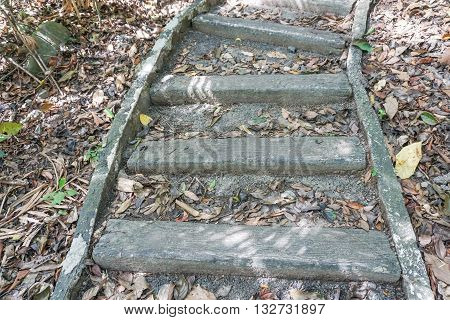 the wooden steps in the deep jungle