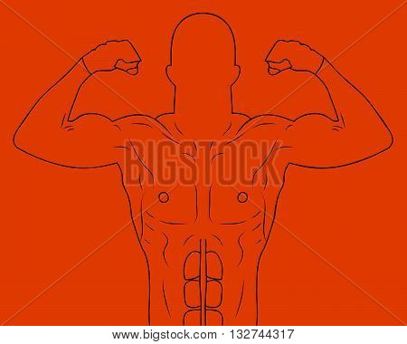 Outlines of a muscular athlete. Vector illustration.