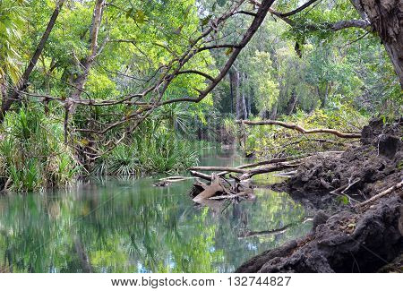 Green tropical lagoon (billabong) in outback northern Australia