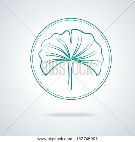 Ginkgo biloba plant. Monochrome outline vector illustration on white background. IIsolated, logo, label and badge in thin line design.