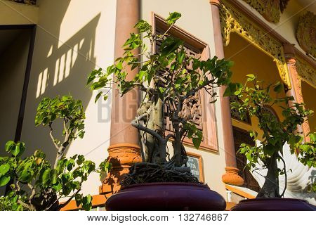 Potted Plants At The Templeoid Church, Under Sunny Sky.mui Ne, Vietnam.