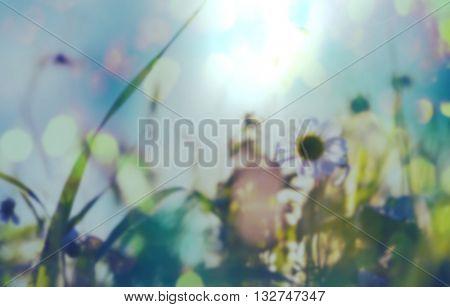 Mountain meadow blur