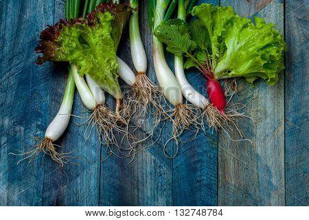 Fresh Scallions Radish And Lettuce