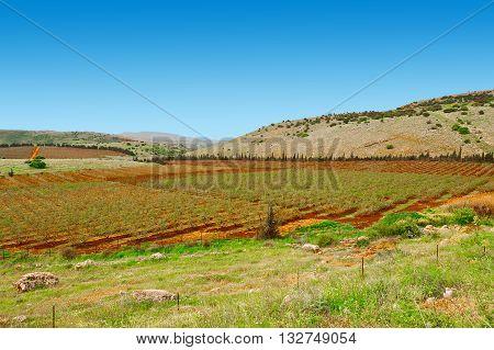 Fields of Galilee in Israel in the Sppring