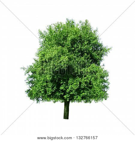 Tree isolated on a white color background