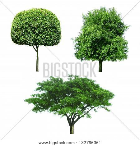 collection of Trees isolated on white color background