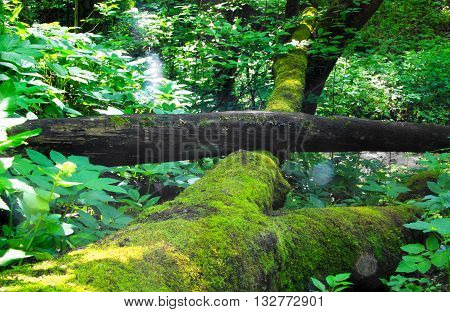 lifeless the log is in a green forest