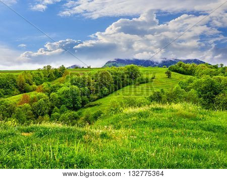 Fruit Garden On Hillside Meadow In Mountain