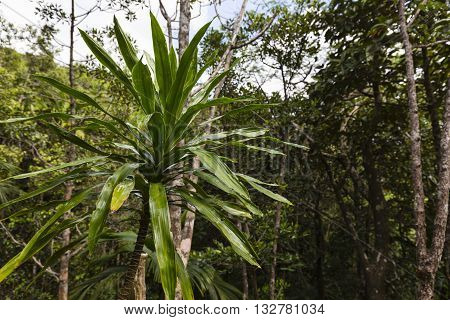 Tropical Rainforest On Mahe, Seychelles