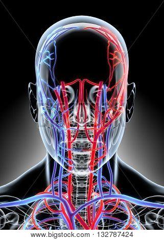 Human Internal System - Circulatory System medical concept - 3D illustration.