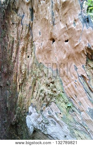 Rainforest trees bark expose its texture to the environment