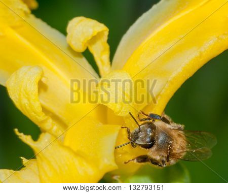 A bee collecting pollen perched on a flower.