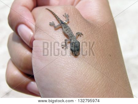 Close up of baby gecko crawling on human hand
