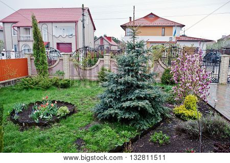 Flowers And Magnolia Tree With Christmas Tree In Front Of The House, Front Yard. Landscape Design Of