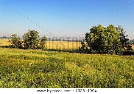 Summer country landscape with field and trees