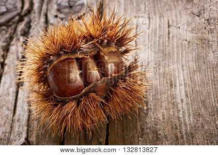 Delicious chestnuts on an old wooden table