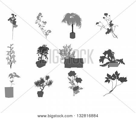 Reference image for the id 132816278 Garden Flowers
