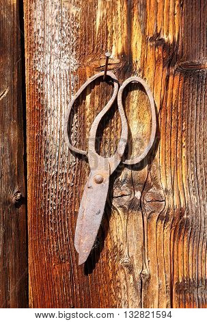 antique old style retro object assemblage on a wooden wall. scissors