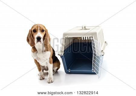 Pretty beagle dog is sitting near a carrier box. Isolated on background