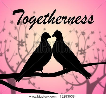 Togetherness Doves Represents Love Birds And Affection