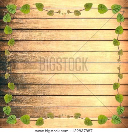 green creeper plant frame on rough wood plank background