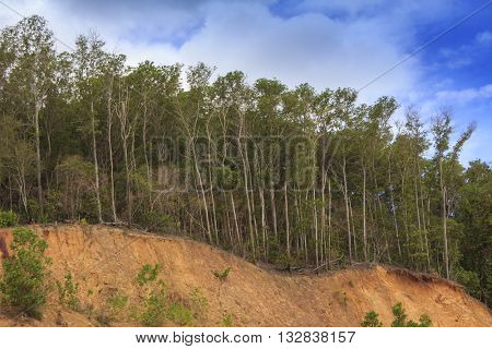 Deforestation environmental problem: rainforest of Indonesia
