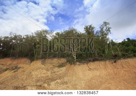 Environmental problems: destruction of tropical jungle rain forest for construction