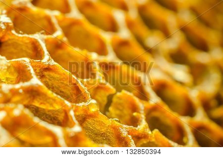 a lot of honeycomb macro as a background