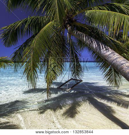 palm tree over the ocean, пальма над океаном