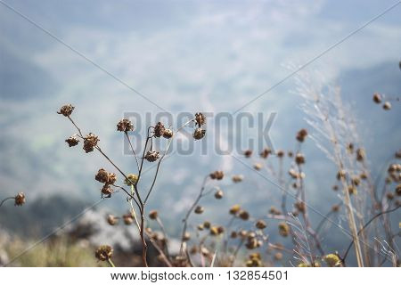 Dry leaves on the mountains in winter .