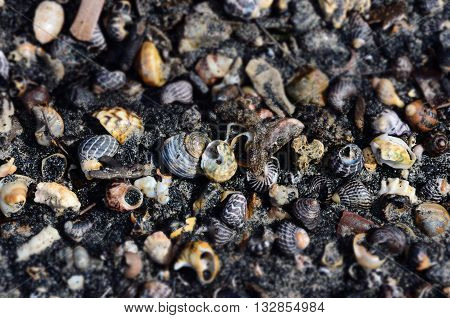Shells and snails in the black sand, Batemans Bay, NSW, Australia