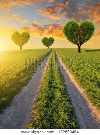 Dirt road in wheat field and trees in the shape of heart at sunset. Spring landscape.