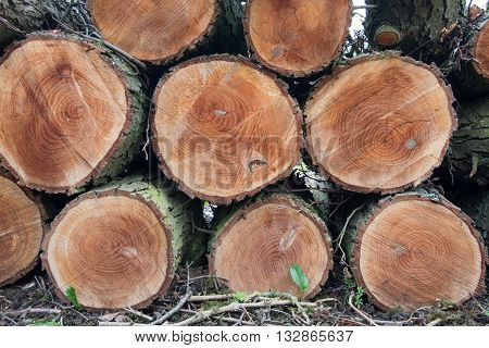 Pile of freshly cut logs in a forest