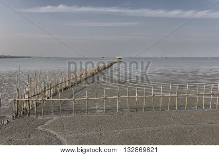 Line Of Bamboo Fence