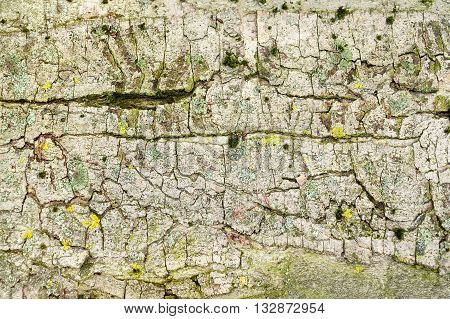 full frame detail shot of a multicolored bark surface
