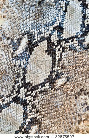 Boa snake skin pattern texture for background
