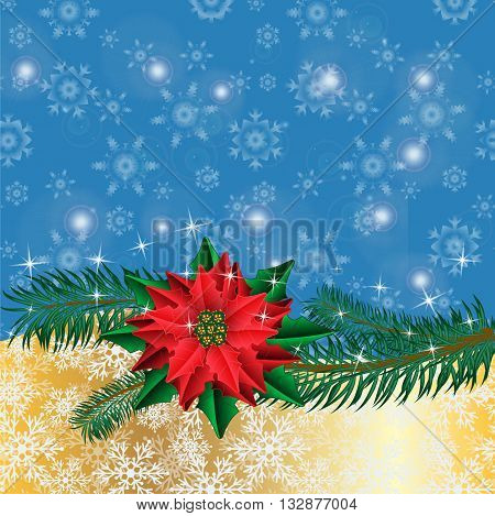 Christmas golden background with poinsettia flowers and fir branches. Vector illustration.
