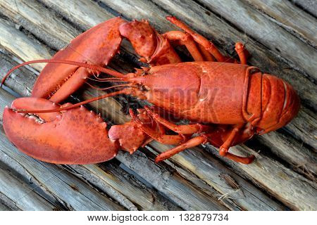 Cooked, Red, Whole, Lobster: On rustic wooden table.