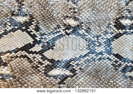 Snake skin pattern texture abstract for background