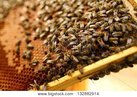 Queen bee is always surrounded by the workers - their servant