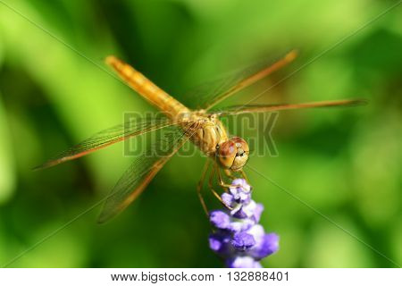 Dragonflies insects animals nature macro Dragonfly - focus on the eye.