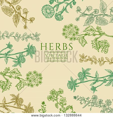 Medical herbs vintage template hand drawn sketch vector
