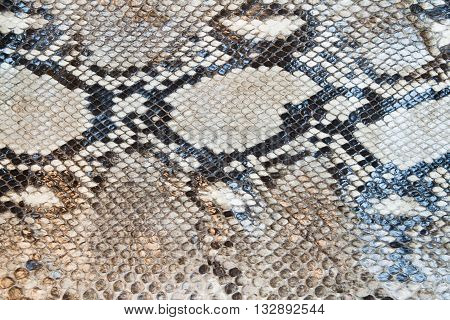 beautiful boa snake skin pattern texture background