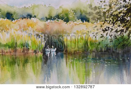 Watercolors painting of summer pond with two swans.