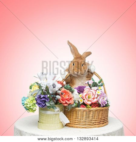 Adorable red domestic lop-eared rabbit holding basket with flowers over pink background. Copy space. Square composition.